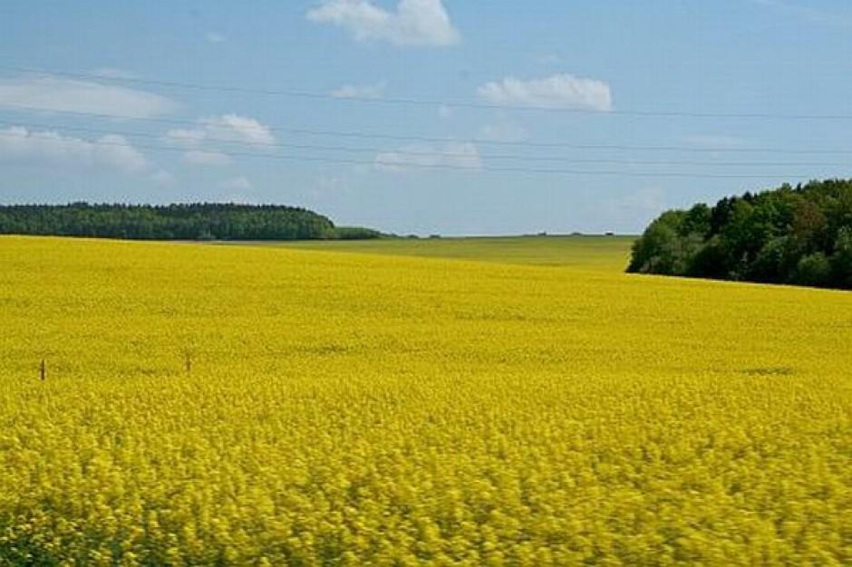 ANR przekazała nieodpłatnie grunty warte 13 mld zł