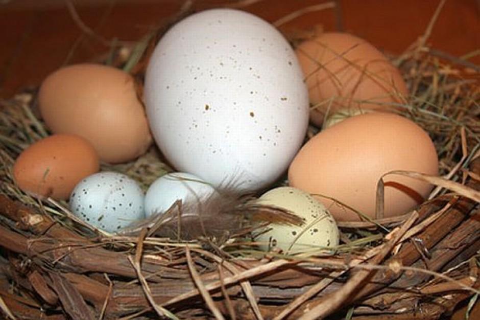Jajka kupujcie z głową