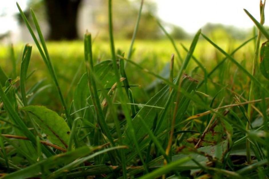 Apel o niewypalanie traw