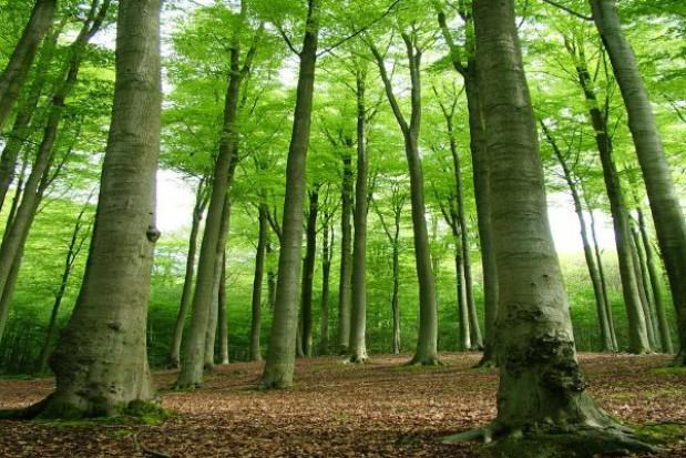 Uczniowie posadzą las