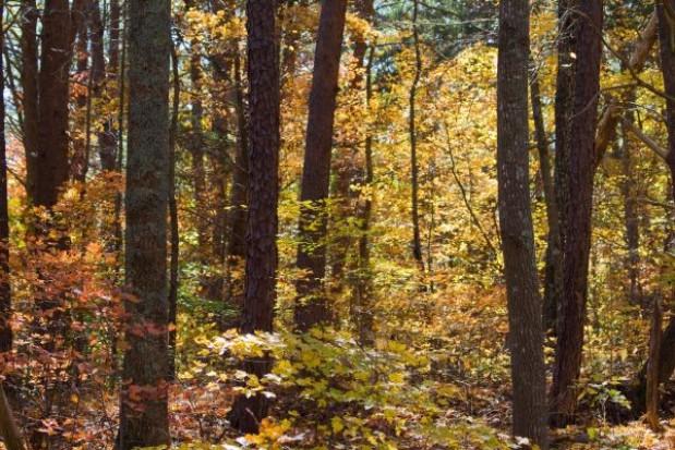 Samorządowcy sadzą las