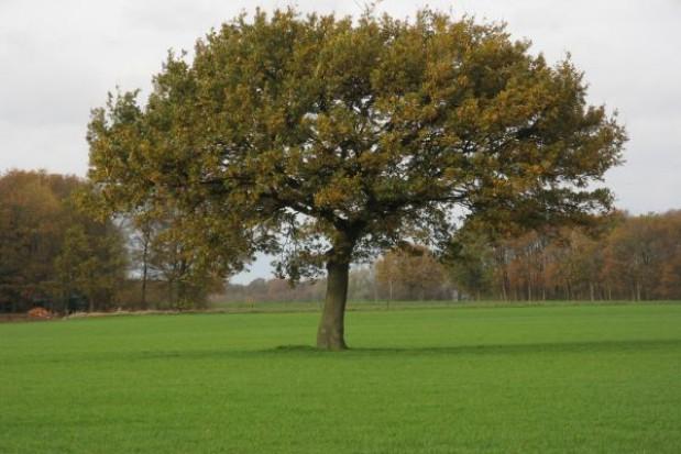 """78 tys. drzew na """"Święto Drzewa"""""""