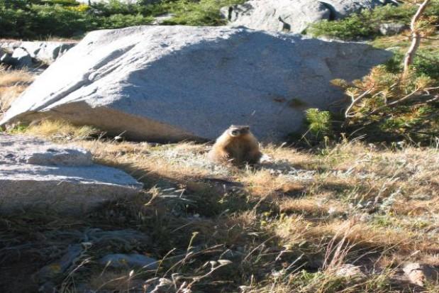 Milion na ochronę niedźwiedzi, świstaków i kozic