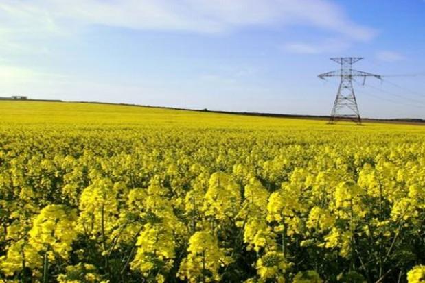 Tereny zalewowe szansą dla biomasy