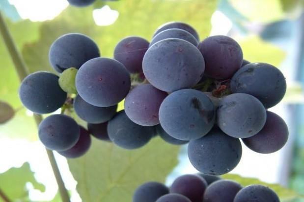 Winiarze mają pomysł na biznes