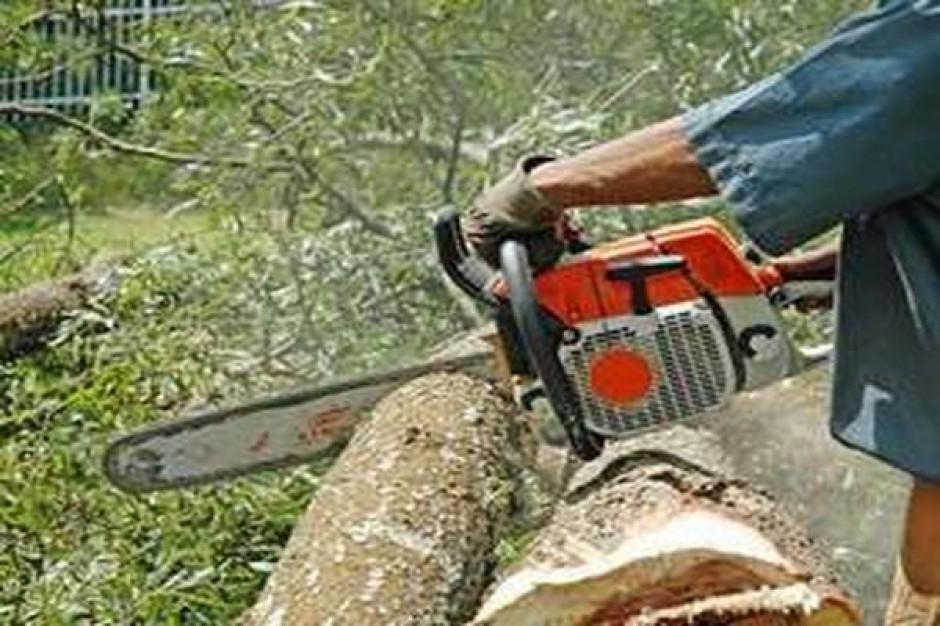 Połowa drzew może runąć