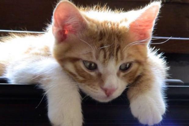 Domów na miarę kota będzie więcej