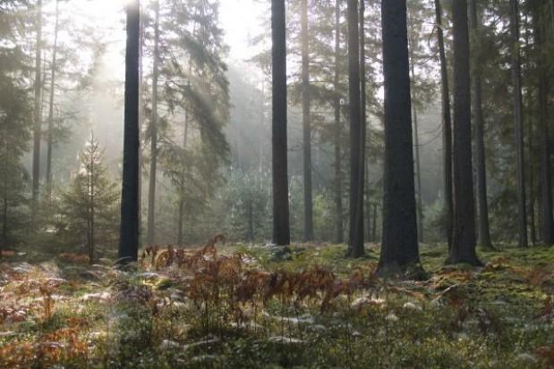 Radni Narewki przeciw powiększeniu białowieskiego parku
