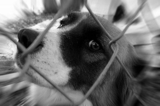 Razem w obronie zwierząt