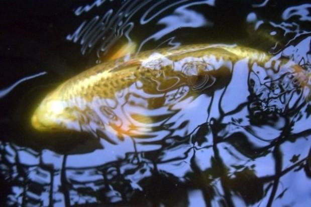 92 mln zł na rybołówstwo w Lubuskiem