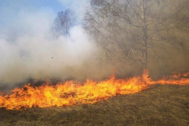Wojewoda apeluje, by nie wypalać traw