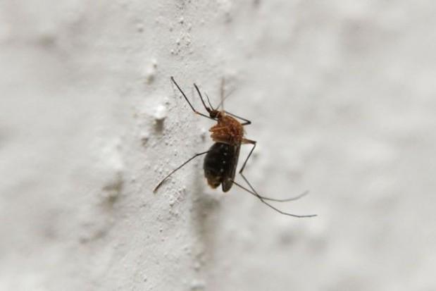 Rozpoczynają walkę z meszkami i z komarami