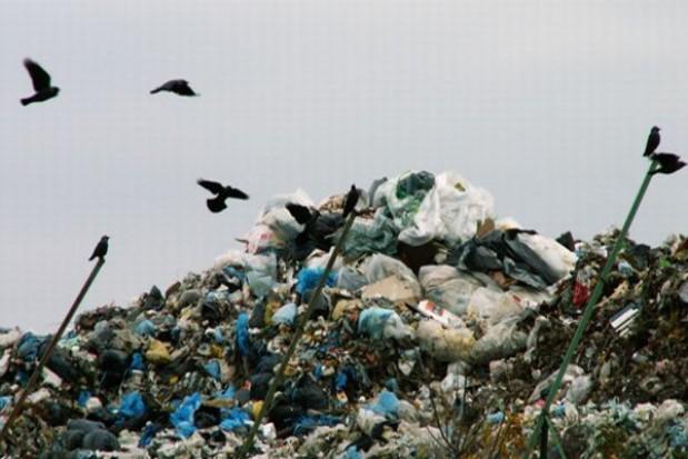 Urzędowa galeria śmieciarzy