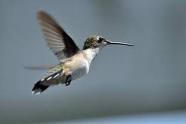 Lepsze warunki bytowania ptaków w Białymstoku