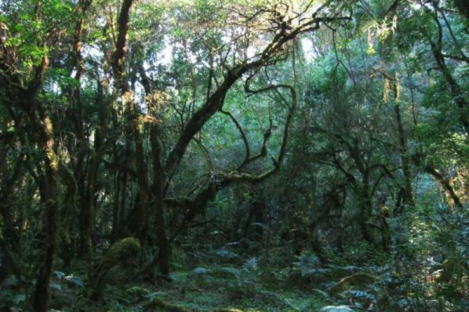 Warszawiacy są z lasu
