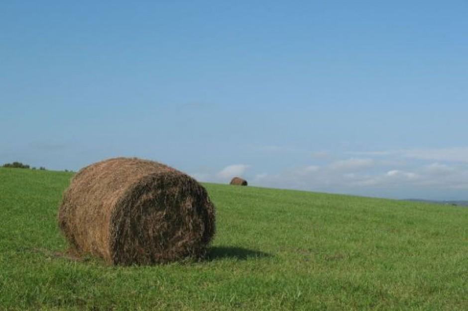 Młodzi rolnicy mogą starać się o dotacje
