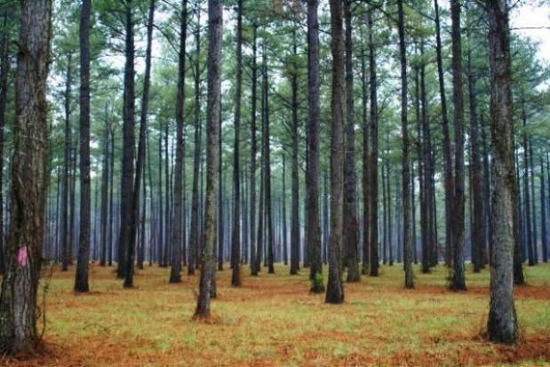 Więźniowie pomagają sadzić las