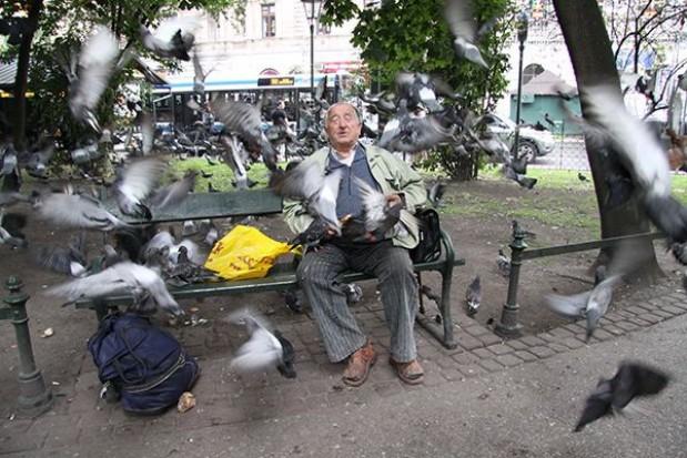 Krakowskie gołębie nagrodzone