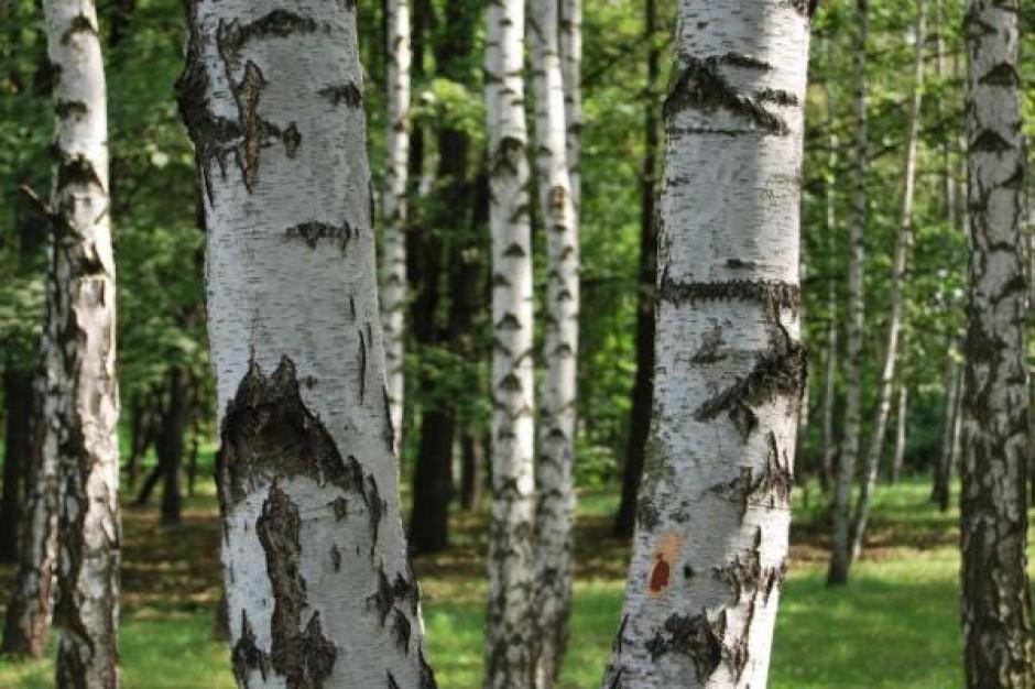 Posadzono 13,5 mln drzew