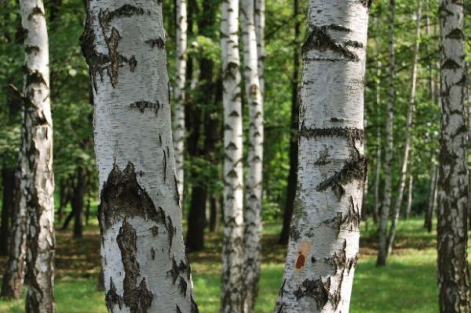 Unia pomaga oczyścić lasy z niewybuchów