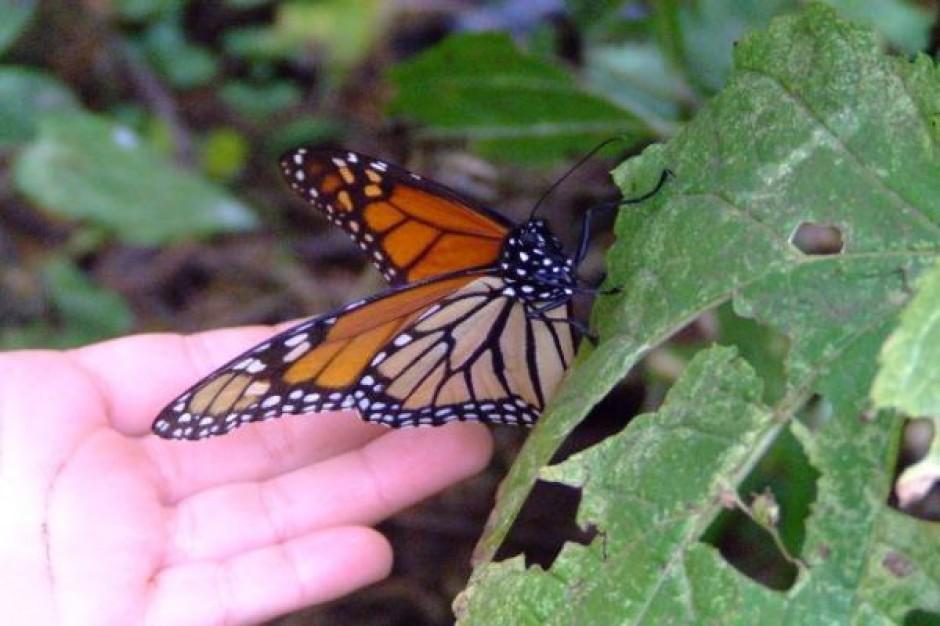 Motyle w obronie zielonej enklawy Krakowa