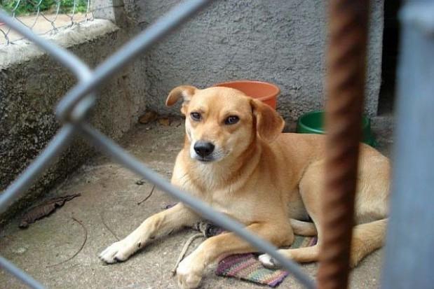 Bezdomne psy ze schroniska do uśpienia?