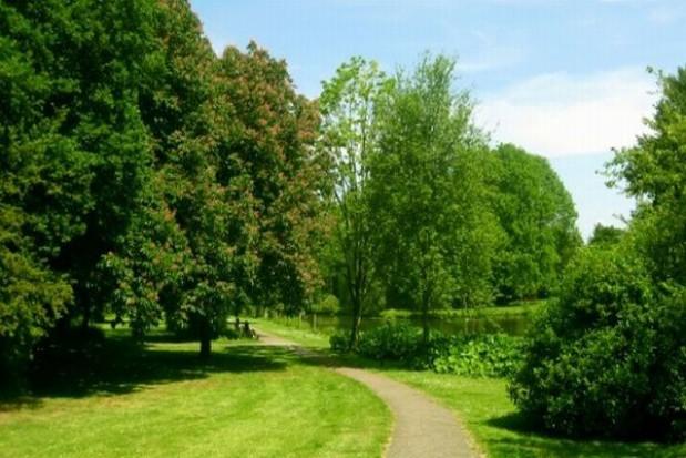 Łódź wycenia przyuliczne drzewa w walce o Europejską Zieloną Stolicę
