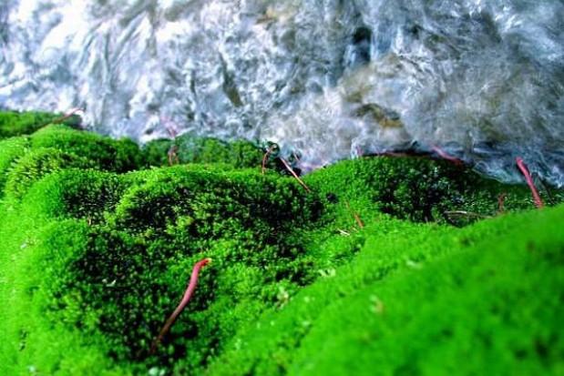60 mln zł na hodowlę alg w Stalowej Woli