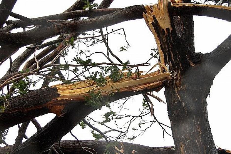 Zakazy wstępu do lasu po nawałnicach