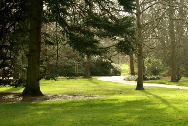 Stołeczny ratusz sfinansuje park 96 drzew