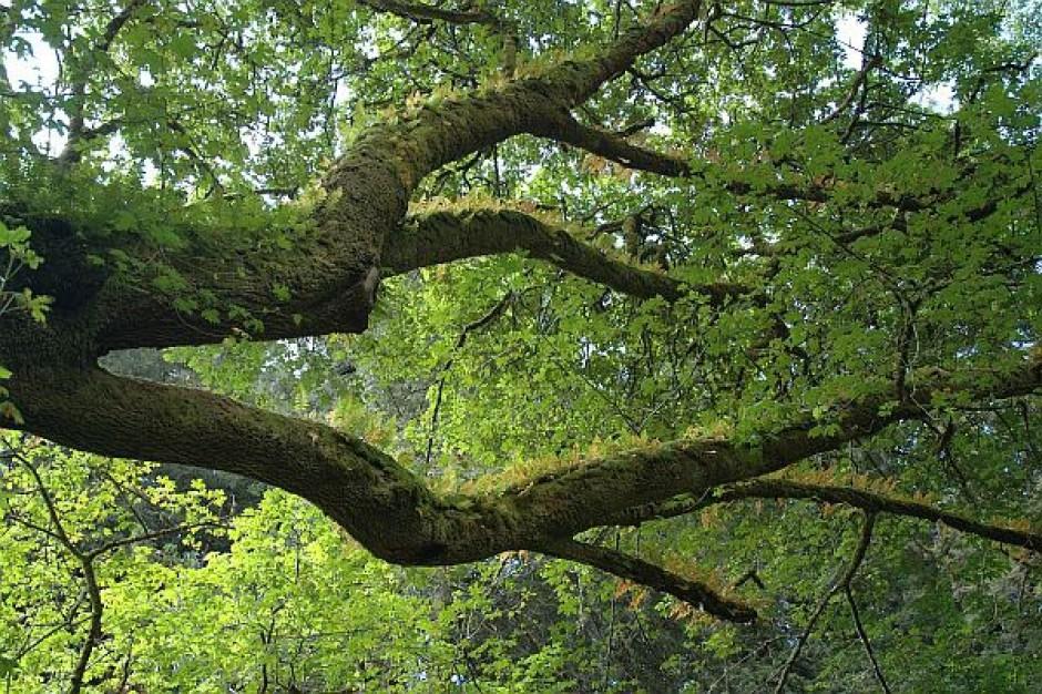 NIK skrytykowała nadzór starostów nad gospodarką leśną