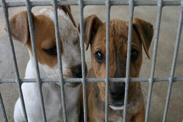 Będą gminne programy opieki nad zwierzętami