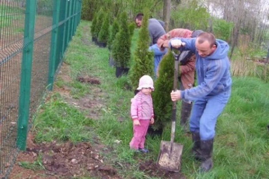 Spraw by na Śląsku przybyło drzew