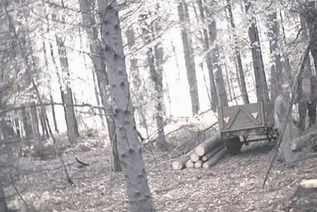 Zobacz jak kradną drzewo z lasu