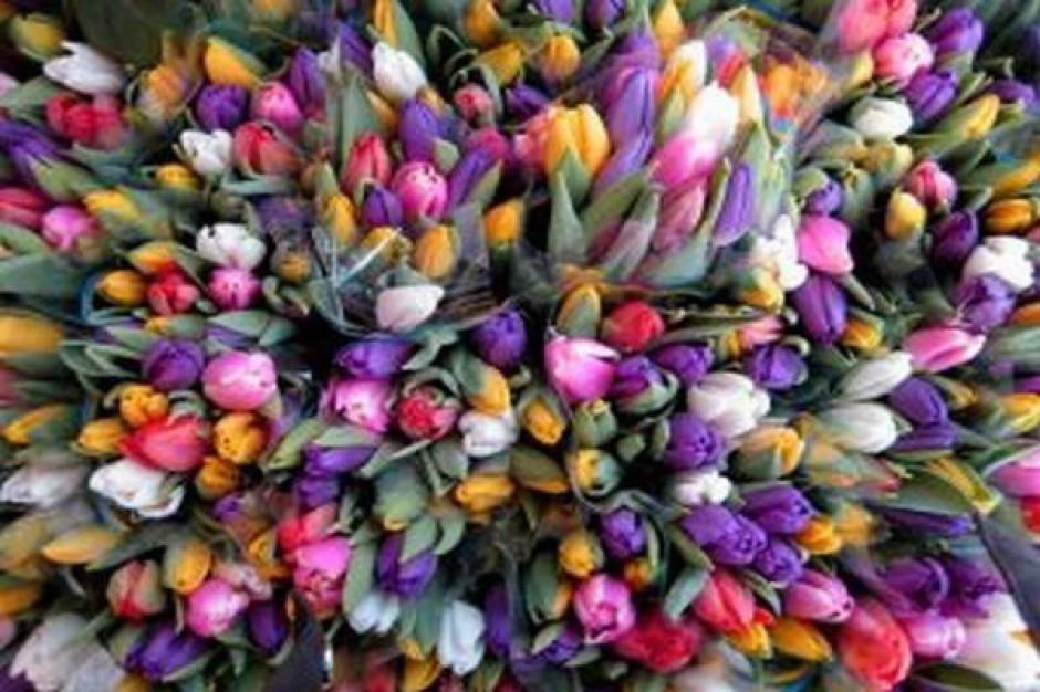 Opolskie kwiaty upiększą Parlament Europejski