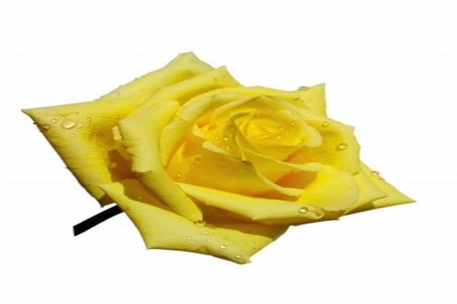 Złota Róża Regionów dla Białegostoku