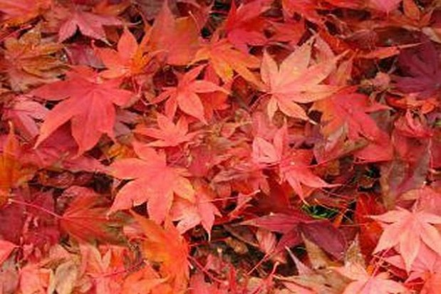 Oddaj zwiędłe liście
