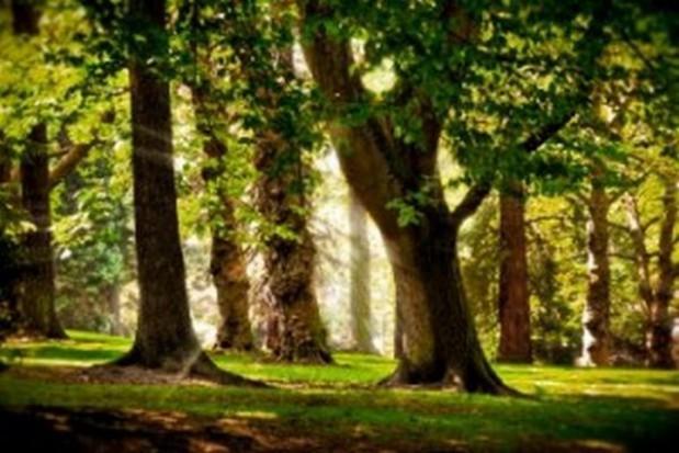 Miasto uratowało zieleń