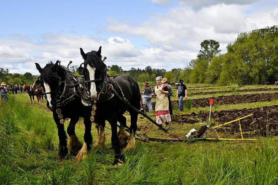 Zmalała liczba gospodarstw rolnych