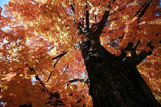 800 nowych drzew dla Warszawy