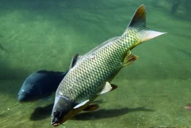 36 mln na rybactwo na Warmii i Mazurach