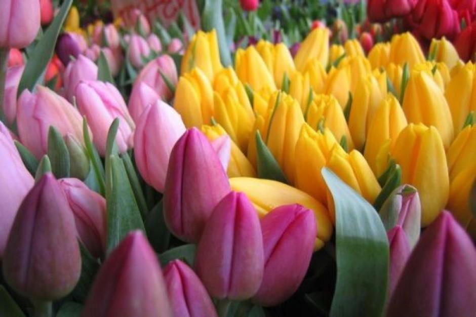 """""""Unijne"""" stragany dla toruńskich kwiaciarek"""