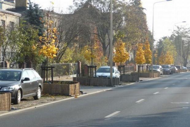 Ochrona zieleni przyulicznej w Poznaniu