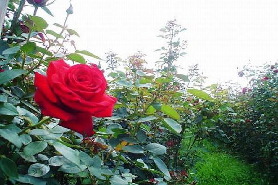 Podpory dla roślin w stołecznym parku