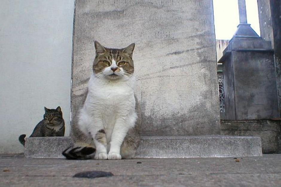 Program dla bezdomnych kotów w Swarzędzu