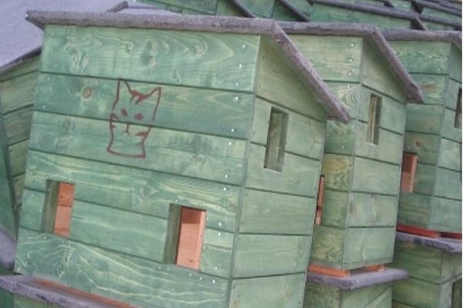 Koty w Gdańsku zamieszkają we własnych domach