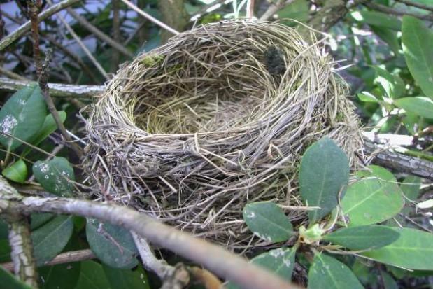 Unijne fundusze pomagają chronić ptaki