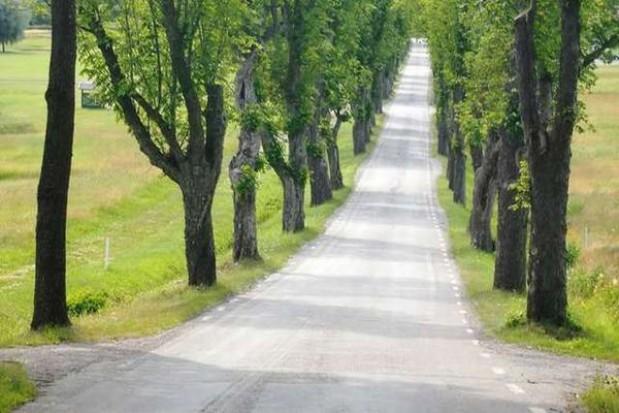 Opole oszczędziło na utrzymaniu dróg