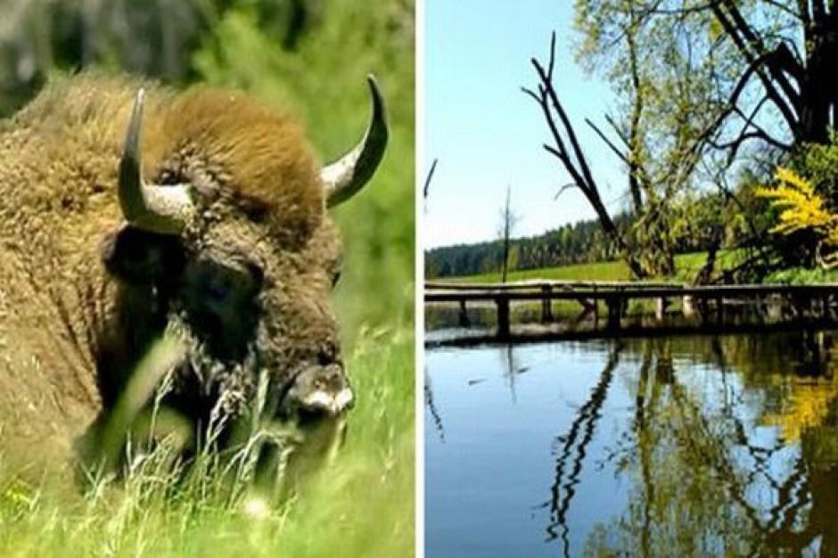 Parki narodowe w Sejmie
