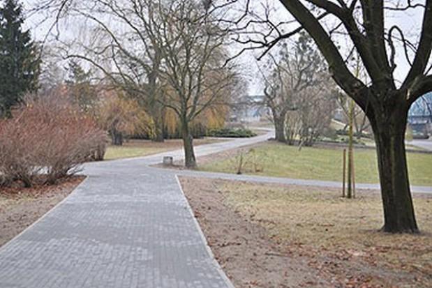 Nowe drzewa na skwerze w Toruniu
